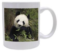 Panda Bear Coffee Mug - Wild Animal Series