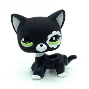 Littlest Pet Shop Collection Lps Toys Short Hair Cat Blythe Black Rare 735935012797 Ebay