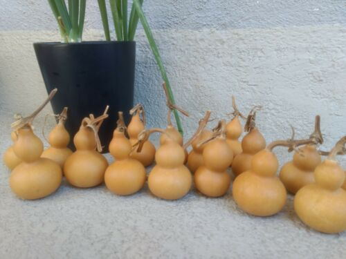 100  Mini bottle gourds dry and clean