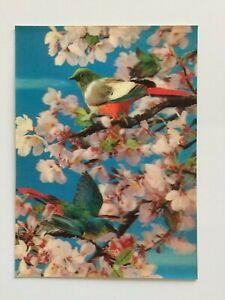 3D-Lenticular-Postcard-Birds-amp-Apple-Blossoms-Tokyo-Japan