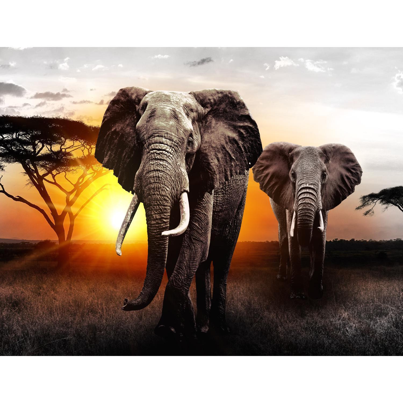 Vlies Fototapete Afrika Elefant Wandtapete Tapete Wandbilder XXL Dekoration Runa