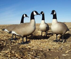 good bigfoot canada goose decoys for sale