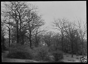 Glass-Magic-Lantern-Slide-HAWK-WOOD-EPPING-FOREST-NO1-C1890-PHOTO-ESSEX-TREES
