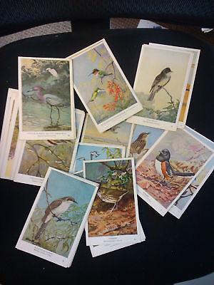 Realistic Komplettset Mit 50 Kunst Karten Vögel Von Osten North Am More Discounts Surprises Sammeln & Seltenes