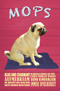 Pug Klug And Charming Tin Sign Shield Arched 20 X 30 CM W1316
