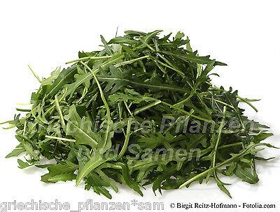 🔥 wilder Rucola *** mediterrane Salat- + Gewürzpflanze 500 frische Samen Balkon