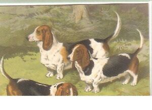 Basset Hound Dog Trading Card showing early breeds of Dogs - Mansfield, United Kingdom - Basset Hound Dog Trading Card showing early breeds of Dogs - Mansfield, United Kingdom