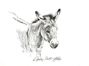 Donkey Original Art ink illustration Equestrian drawing sketch listed by artist