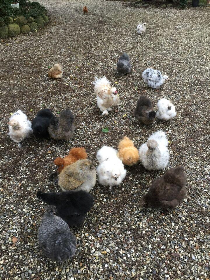 Kyllinger, 3 stk.