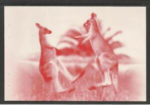 Bill Boyd /& Kanga Joe in 1923 AUSTRALIA 2004 BOXING KANGAROO POSTCARD