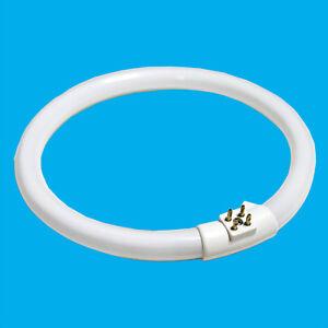 2 X 11w T4 Tageslicht Weiß Kreis Cfl 4-polig Energiesparend Glühbirne Lampe