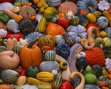 Autumn Harvest 1000 Piece Jigsaw Puzzles Kids Adult Puzzles Colorful Pumpkin New