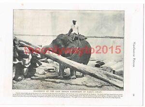 East-Indian-Elephants-at-Earls-court-London-Book-Illustration-Print-1895