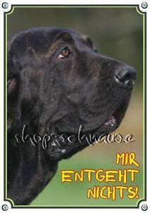 Fila Brasileiro - Panneau d'avertissement Dog Shield Massive To Din A3