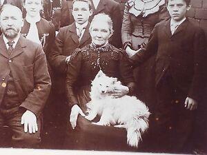 Antique Nice Cabinet Card Photo American Eskimo Samoyed Pomeranian