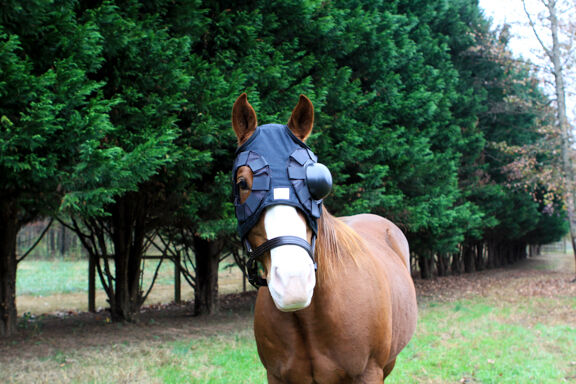 New interchangeable equine eye saver cup hood left right or both eyes reg. Horse