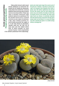 How to Grow Lithops and Other Living Stone Plants - cacti succulents book,,,!