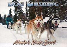 Dog Mushing Siberian Huskies Finger Lake Iditarod 2008 Alaska AK Animal Postcard