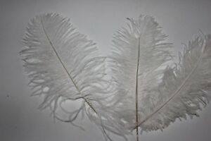 "17-20 CM 100 WHITE SECOND GRADE SOFT FLOSS 7-8/"" OSTRICH FEATHERS"