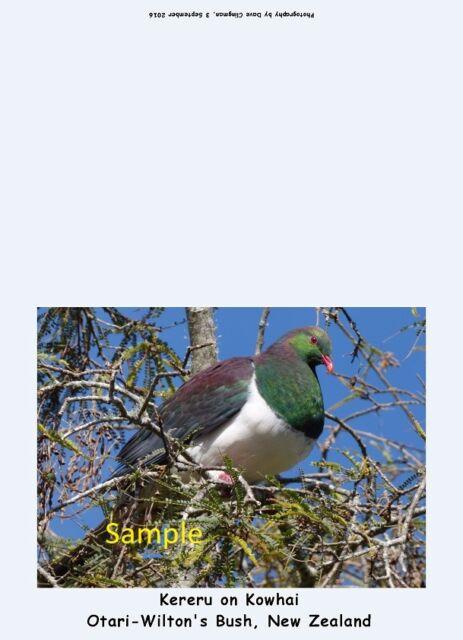 4 new zealand wildlife photo greeting cards with envelopes
