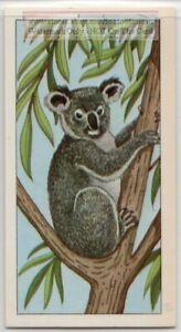 Koala-Bear-Australia-Marsupial-Mammal-Eucalyptus-Vintage-Trade-Ad-Card