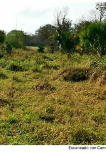 Vendo 62 Hectareas sin desmontar en Paraiso Champoton con loma baja a 8 kms de Ciudad con agua Urge