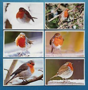 Set-of-6-NEW-Bird-Postcards-European-Robin-Red-Breast-Nature-Snow-99M