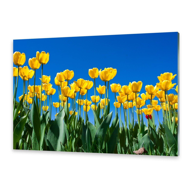 Acrylglasbilder Wandbild aus Plexiglas® Bild Tulpen Blaumen