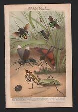Chromo/Lithografie 1894: INSEKTEN Exotische Hautflügler Käfer Schmetterlinge