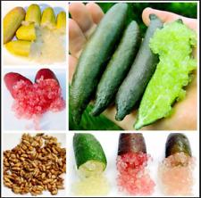 20Pcs Finger Lime Tree Seeds australasica Australian Fruit Exotic Bonsai Plants