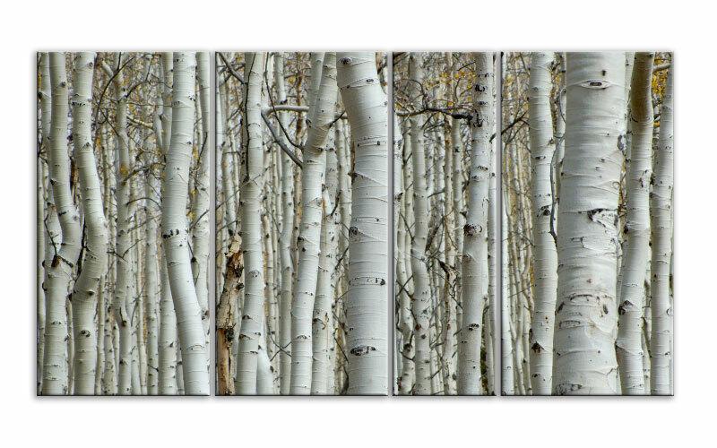Weiß WOODLAND FOREST Leinwand 4 BILDER WANDBILD D00849 MEGA XXL LIVING PICTURE