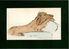 Lucy Dawson ~ Irish Setter ~ (Red setter) ~ Hand Coloured Genuine Vintage 1939