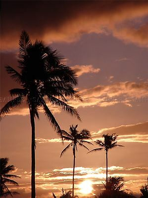 NATURE LANDSCAPE TROPIC PALM TREE SILHOUETTE SUN SKY POSTER ART PRINT BB1516A