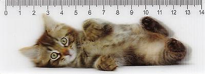 3d - Lineal: Niedliche Kleine Getigerte Katze - Tabby Kitten - Chaton Einfach Und Leicht Zu Handhaben