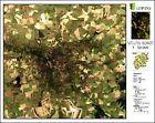 Leipzig - Satellitenbildkarte 1: 50.000 (1990, CD)
