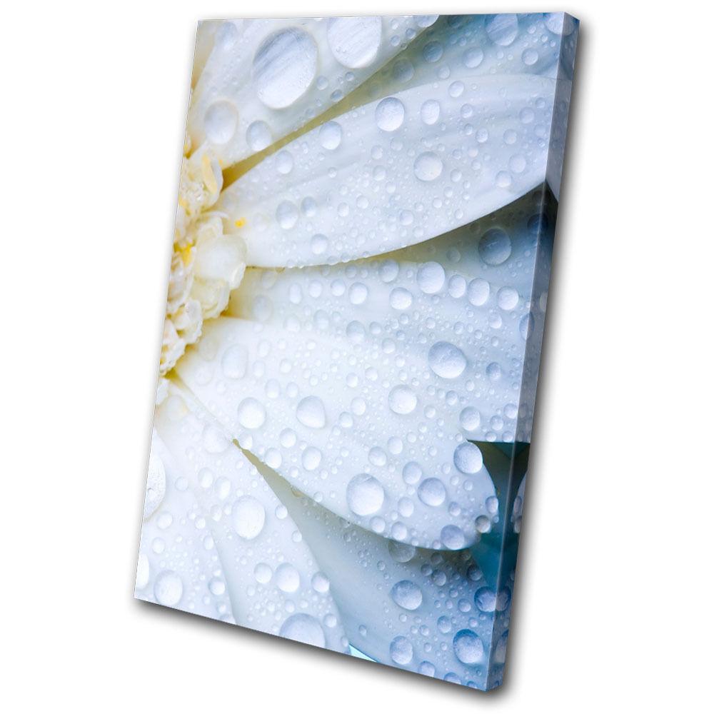 Floral Daisy Flower SINGLE TOILE murale ART Photo Print