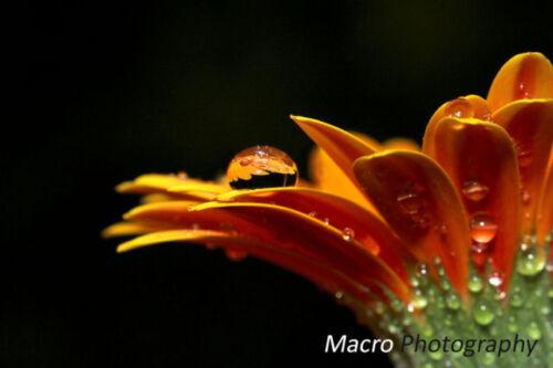 Super Wide Hi Def Fisheye Lens For Nikon D3400 D5600