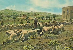 Rare Vintage Scenic Postcard - The Shepherd's Field Bethlehem - Israel Unposted.