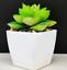Artificial-Succulent-Plants-Small-Fake-Succulent-Bonsai-Garden-Miniature-Decor thumbnail 15