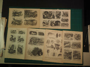 Konvolut mit Drucken zu Zoologie u.a. Fledermäuse, Katzen, über 100 Jahre alt - Markt Wald, Deutschland - Konvolut mit Drucken zu Zoologie u.a. Fledermäuse, Katzen, über 100 Jahre alt - Markt Wald, Deutschland