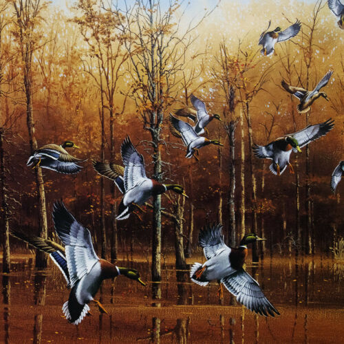 Green Timber Mallards Phillip Crowe Signed Limited Edition Wildlife Print 37x24