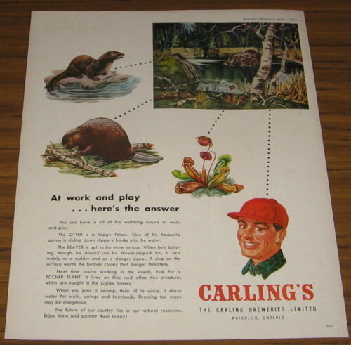 1951 Vintage Ad Carling Breweries Limited Waterloo,Ontario Beer Beavers