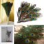 Natural-Peacock-Tail-Eyes-Feathers-8-12-039-039-Long-BOUQUET-10PCS-Lot thumbnail 10