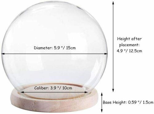Glass Globe Dome Display Cloche Case Jar Wood Base Flower Model Felt Container