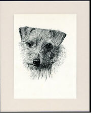 NORWICH / NORFOLK TERRIER OLD DOG HEAD STUDY PRINT FROM 1935 READY TO FRAME