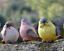 Garden-Statue-Colorful-Bird-Resin-Patio-Lawn-5-9-034-Outdoor-Home-Decor-Magpie-Set6 thumbnail 2