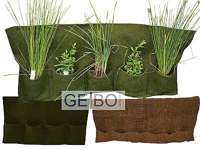 Sumpfprimel mix Primel Mix Teichpflanze Sumpfpflanze Teichpflanzen Primeln