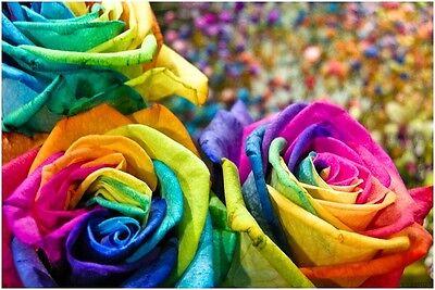Rare Multi-Colors Rainbow Rose Flower Seeds Garden Plant Buy 2 Get 25% Discount