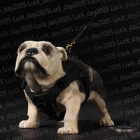 """VERY HOT TOYS Animal Series British Bulldogs 1/6 Fit for 12"""" action figure"""