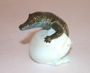 baby crocodile hatching from egg a reptile lover or terrarium